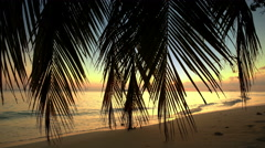 Sunset on the ocean. Beautiful View On Ocean Background With The Palm Branches. - stock footage