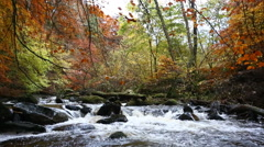 Stream rapids in autumn, Moness Burn, Aberfeldy, Scotland Stock Footage