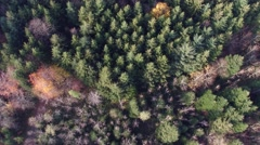 Aerial Topshot of forest in autumn Stock Footage