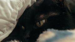 Black cat burrowing underneath some blankets Stock Footage
