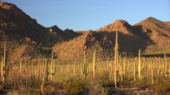 Desert Landscape in Saguaro National Park Stock Footage