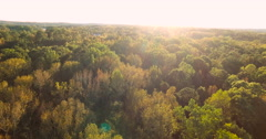 Green Atlanta Forest Stock Footage