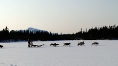 People ride dog sleds by a winter trail in Hemsedal, Norway. Stock Footage
