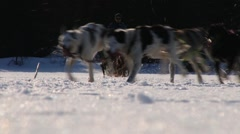 People ride dog sleds in Hemsedal, Norway. Stock Footage