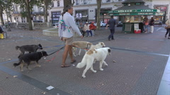 Professional dog walker with dogs in downtown Montevideo, Uruguay Stock Footage