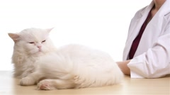 Veterinarian doctor and a cat Stock Footage
