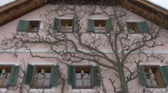 View of a tree in front of a beautiful building on a winter day, Hallstatt Stock Footage