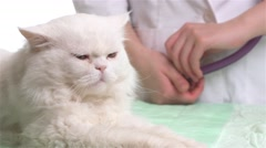 Veterinarian doctor is making a check up of a cute cat Stock Footage