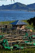 Fish farm at Lake Tondano - stock photo