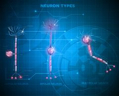 Neuron types, nerve cells Stock Illustration