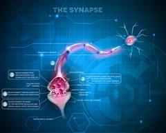 Synapse Stock Illustration