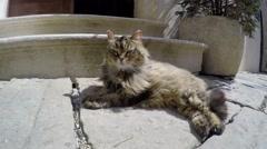 Cat Enjoying the Sun Stock Footage