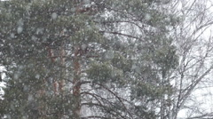 Slow motion view of heavy snow fall in evergreen forest Stock Footage