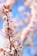 Blooming flowers. Floral background Stock Photos