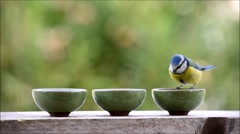 Bird feeding from small bowls Stock Footage