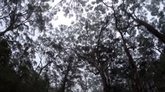 Eerie misty forest - stock footage