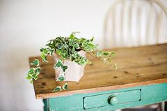 Ivy growing out of plant pot on wooden table - stock photo