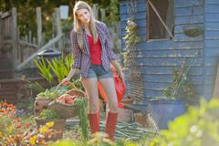 Woman gathering vegetables in garden - stock photo