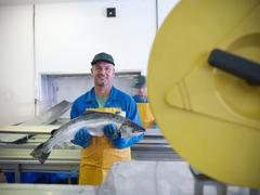 Portrait of man holding hand-reared Scottish salmon  on production line of fish Stock Photos