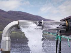 Salmon harvested from water through pipe on salmon farm Stock Photos