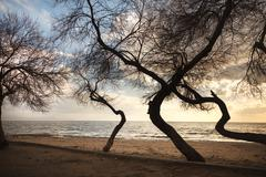 leafless trees creates very nice graphical elements in front of the seaside - stock photo