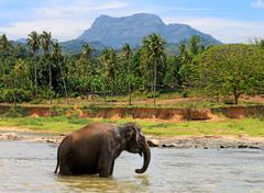 Alone elephant in in jungle Stock Photos