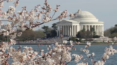 Jefferson Memorial and cherry blossom in Washington D.C. - stock footage
