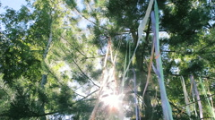 Colored Ribbons Hang on the Trees Stock Footage