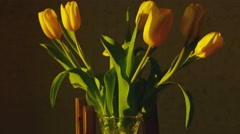 Withering yellow tulips Stock Footage