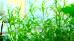 Fresh rosemary herb in the house Stock Footage