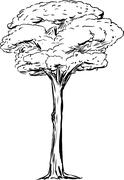 Outined Tall Tree - stock illustration