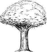 Outline of Tree with Thick Trunk - stock illustration