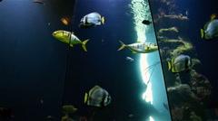 Deep Ocean Fish Swimming In Aquarium Stock Footage