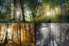 Views of four seasons of forest - stock photo