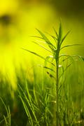 Green plant growing blurry background - stock photo