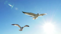 Seagulls Flying with Sun Flare Looking Up at Blue Skies Slow Motion Stock Footage