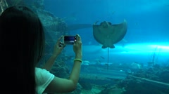 4k, Woman pictures with smartphone a Giant manta ray underwater at aquarium -Dan Stock Footage