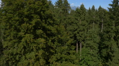 Aerial - Flying down over forest. Close flight by tree - stock footage