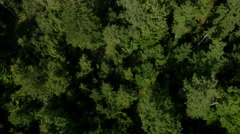 Aerial, vertical - Lush, green forest Stock Footage