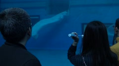 4k, people watch the beluga white whales tank swimming on underground-Dan Stock Footage