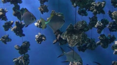 4k, view of the underwater in a Oyster Farm with fishes-Dan Stock Footage