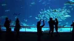 4k, Visitors silhouetted in aquarium filled with fish, sharks and manta ray-Dan Stock Footage