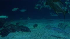 4K blue deep water with fishes swim underwater at the bottom of the sea -Dan Stock Footage