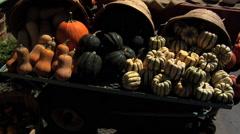 Pumpkin & squash display - stock footage