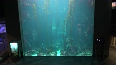 4k Giant kelp forest (Macrocystis pyrifera) underwater in Aquarium of Taiwan-Dan Stock Footage