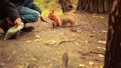 Cute little boy feeding squirrel at park in autumn. 1920x1080 Stock Footage