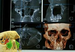 Model of human skull in lab Stock Photos