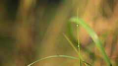 Dew drops on a blade of grass Stock Footage