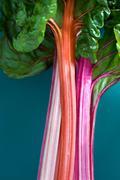 Close up of rhubarb stocks Stock Photos