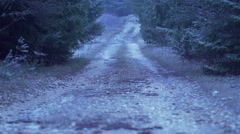 Snow is falling on a mountain road with pines - stock footage